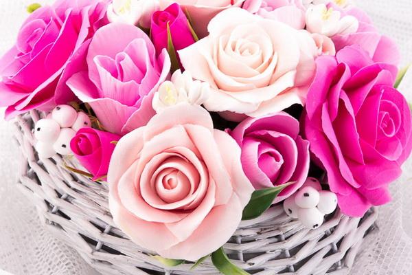 Всё о комнатных растениях ma fleur ru