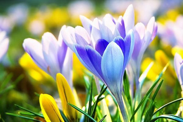 Image result for фото цветы веÑны
