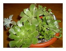Комнатные растения виды фото