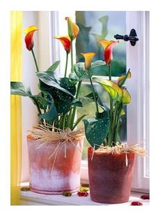 Цветы и комнатные растения в доме