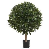 лесной кактус шлюмбергера уход в домашних условиях