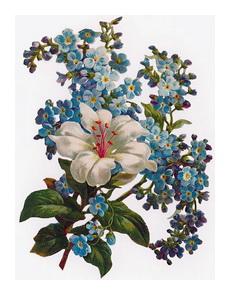http://www.ma-fleur.ru/images/442.jpg