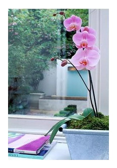 какие фитолампы лучшие для комнатных растений