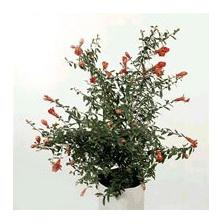 самые красивые цветы из бисера схемы