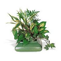 Всё о комнатных растениях
